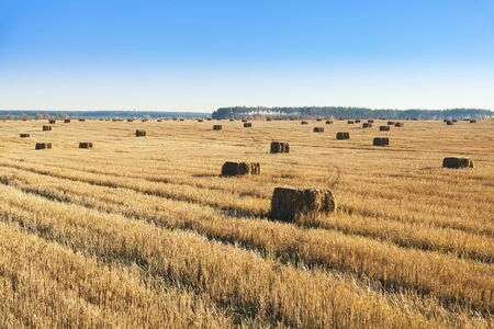 Bales of hay scattered around on field
