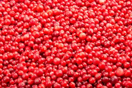 Frozen fresh cranberry. Food background of berries. Frame filled with cranberry. Top view.