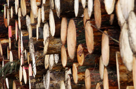 ambiente: troncos Stock Photo