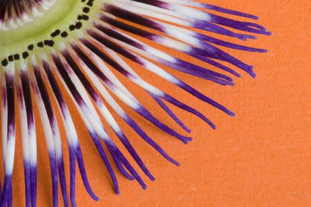 Macro of Passiflora flower isolated against orange background