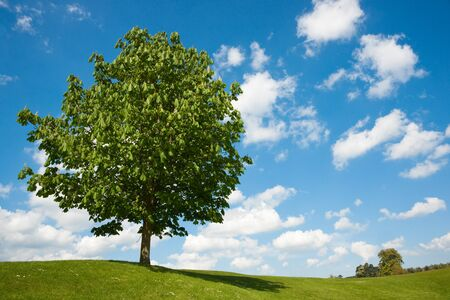 Single tree on grass against blue sky with clouds Stock Photo