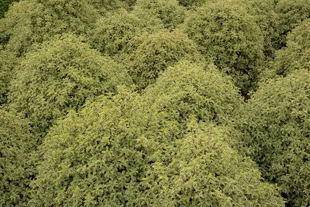 Variegated shrub patterns suitable for background