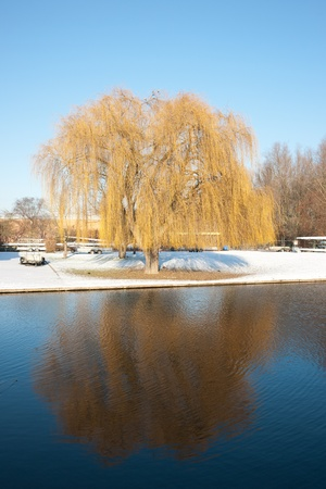 Willow with snow reflected on river against clear blue sky