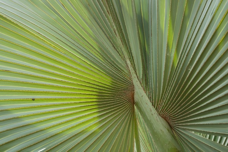 Abstract pattern of a green palm tree Stock Photo