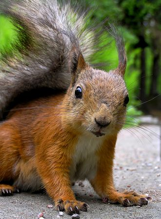 Squirrel Stock Photo - 272819