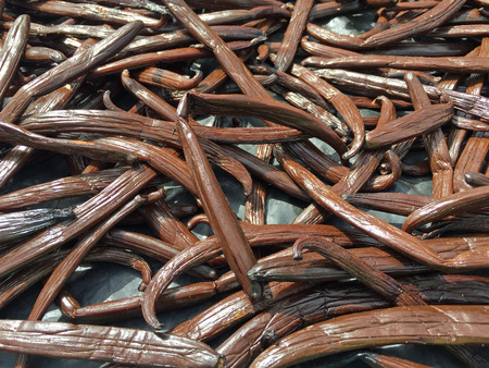 Multiple Tongan vanilla beans laid out on a table