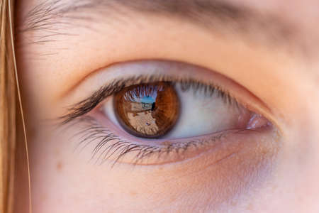 Detail of a girl's brown eye with reflection, eyelashes, eyebrow and blonde hair.