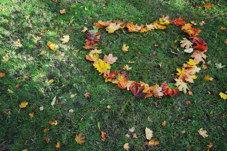 dry grass: Dry maple leaf as heart shape on a fresh green grass.