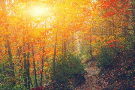 Chemin dans le parc naturel avec des arbres d'automne. Paysage forestier pittoresque d'automne ensoleillé avec la lumière du soleil. Arbres d'automne avec fond de feuilles colorées. Sentier en automne matin scène forêt colorée nature Banque d'images