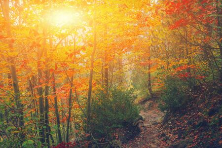 Pfad im Naturpark mit Herbstbäumen. Sonniger Herbst malerische Waldlandschaft mit Sonnenlicht. Fallbäume mit buntem Blätterhintergrund. Fußweg in der bunten Waldnatur der Herbstmorgenszene Standard-Bild
