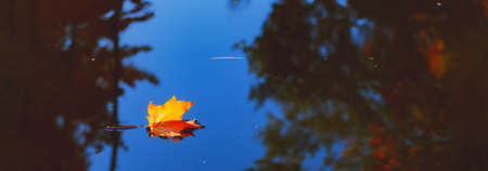 Yellow orange maple leaf floating in lake.