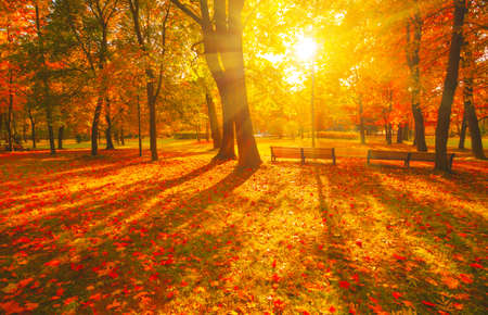 Autumn forest path. Orange color tree, red brown maple leaves in fall city park. Nature scene in sunset fog Wood bench in scenic scenery Bright light sun Sunrise of a sunny day, morning sunlight view.