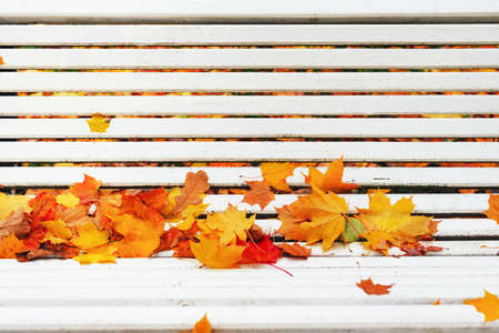 Colorful autumn dry leaves border frame on white painted rustic wooden bench. Empty space for copy, text, lettering. Horizontal postcard template. Fall leaf on old grunge wood deck background