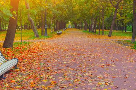 Autumn park alley road in city landscape.