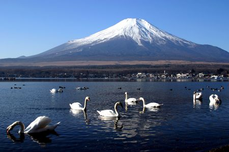Swan Party with Mount Fuji in Background