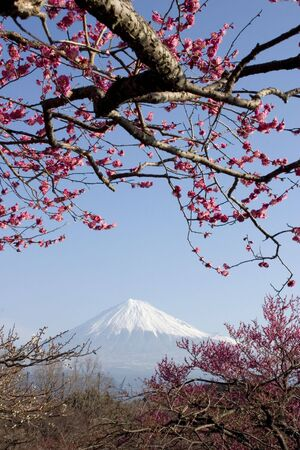 Mount Fuji with red plum blossoms