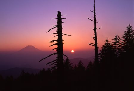 Sunrise with Mount Fuji and silhouettes of old trees in the foreground photo