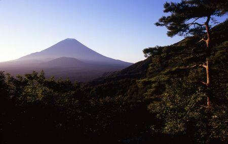 Mount Fuji in a sea of pines