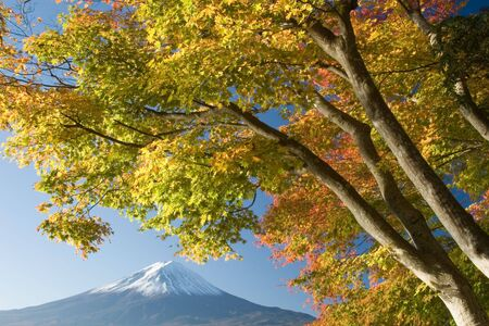 Mount Fuji with beautiful Fall leaves in foreground photo