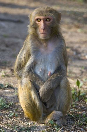 jiangsu: A wild monkey in Jiangsu Provence, China