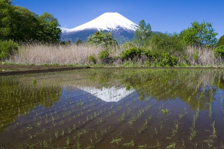 A newly planted rice paddy in the Japanese countryside with Mount Fuji in the background
