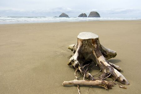 A lone tree stump in the sand of Central Oregon