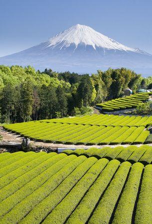 富士山と新鮮な緑茶の行