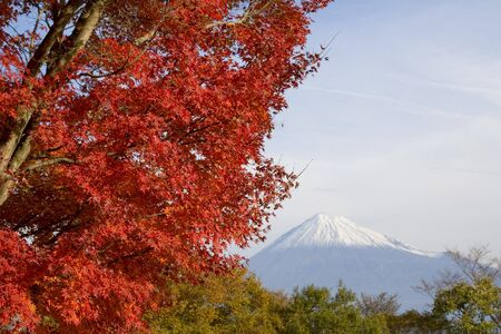 Beautiful red leaves with Mount Fuji photo