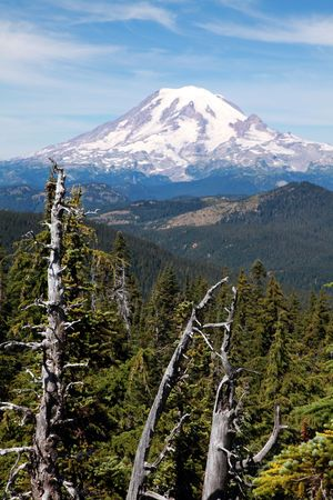 Scenic view of Mount Rainier with dead trees in foreground.