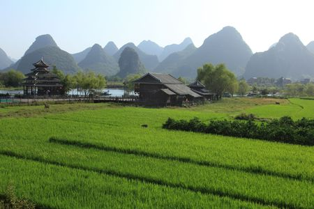 A lush rice field with Karst mountains in the background in Southern China