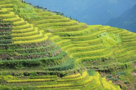 The 500 year old terraced rice fields of Longshen, China Stock Photo