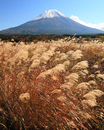 Mount Fuji with a wild field of Grass in late Fall