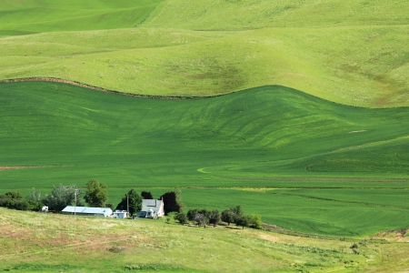 palouse: The rolling hills of Palouse, Washington with farm house