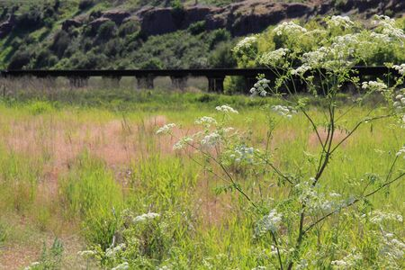 wood railroad: An old wooden railroad trestle in eastern Washington