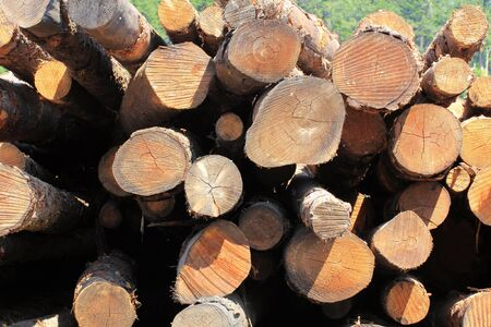 lumber mill: A stack of cut logs at a lumber mill