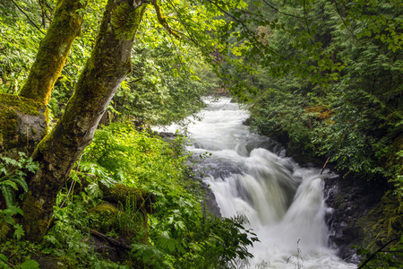 white salmon river: A waterfall on the White Salmon River, Washington