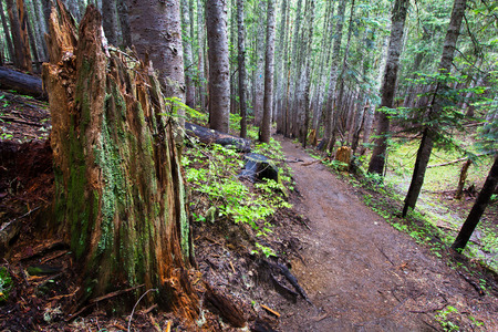 pacific northwest: A trail deep in the woods in the Pacific Northwest