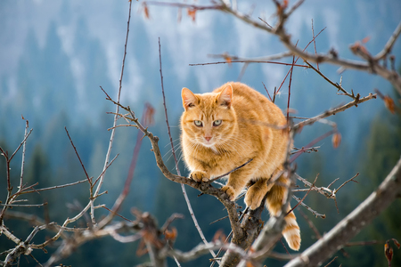 wild cat: Wild cat in the mountains Stock Photo