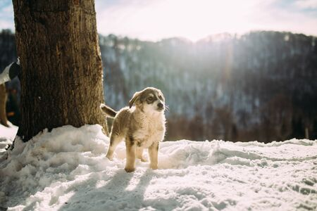 dog in the mountains in winter Stock Photo