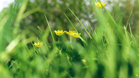 Fresh Spring bokeh background 免版税图像