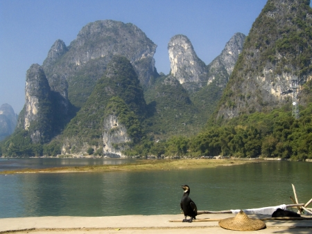 Cormorant used for fishing in the harbor in Guilin Stock Photo