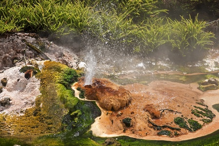 Geysers and hot springs are located in many places around Rotorua photo
