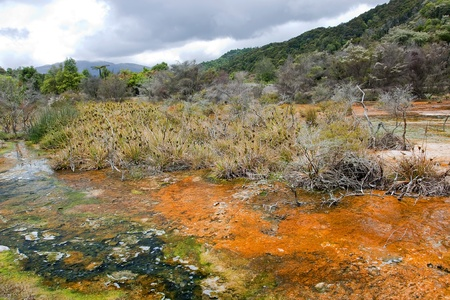 Geysers and hot springs are located in many places around Rotorua Stock Photo
