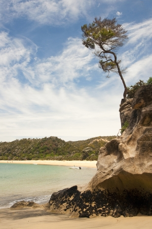 Lonely tree on a high coastal cliff photo