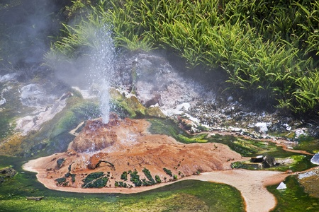erupt: Geysers and hot springs are located in many places around Rotorua Stock Photo