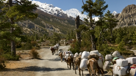 Caravan of mules for delivery in Nepal Himalayas Stock Photo