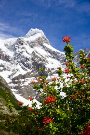 Snow-covered rocks, green or flowering shrubs Torres del Pain