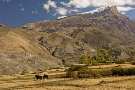 extend: In the area of Muktinath extend desert hills