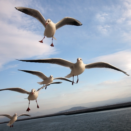 Seagulls in flight over the sea and land in the distance