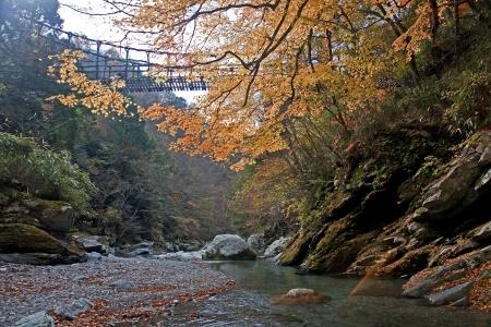 Bridge of the vines - view in autumn Stock Photo - 16711492